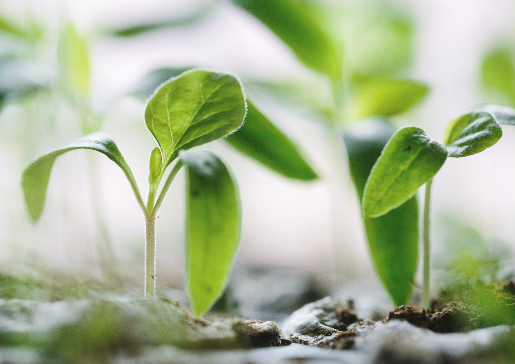 Seedlings growing, just like how you should think about fostering relationships in fundraising